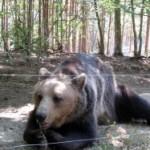 Hiking and Bear Spotting in Bulgaria