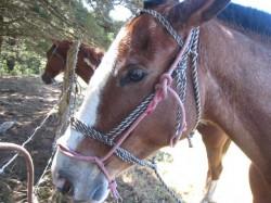 horse_monteverde_costarica