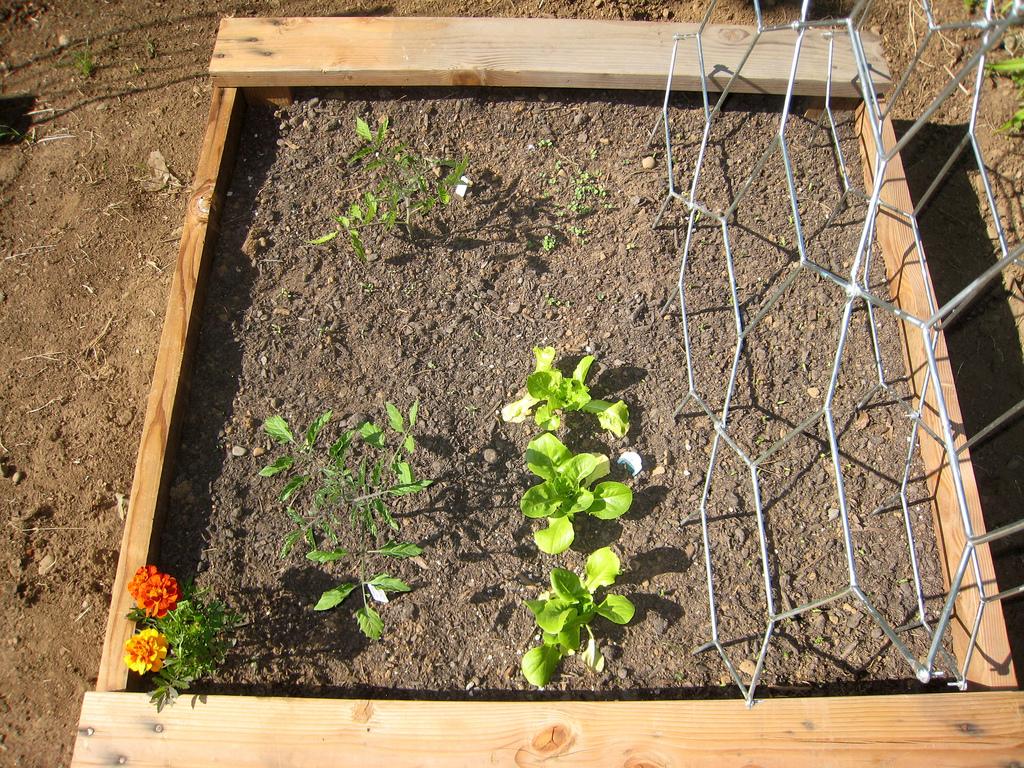 Container Garden: Week 1