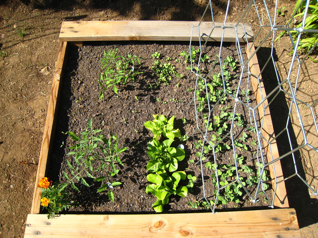 Container Garden: Week 2