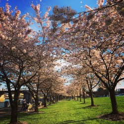 Portland Spring: 31 Reasons To Make It Through Another Winter